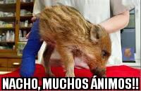 nachoAnimos